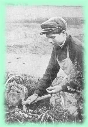 Recolte des escargots