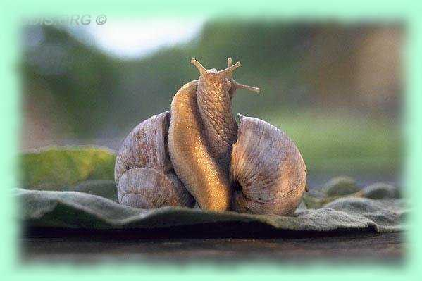 Comment les escargots font l amour [PUNIQRANDLINE-(au-dating-names.txt) 27